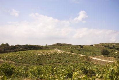 Orben 2016, mejor vino español para Wine Spectator