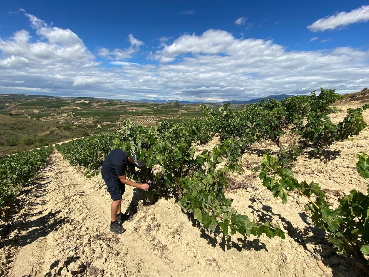 "Bodegas Dominio de Berzal presenta ""Selección Privada 2016"", la máxima expresión de la uva tempranillo de Rioja Alavesa"