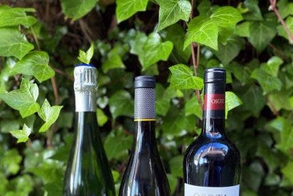 Una apuesta por el consumo ético y responsable en tres cajas de vinos: Green Box Lavinia