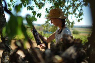Matsu, la bodega en la D.O. Toro del Grupo Vintae, da la bienvenida a La Jefa 2018, su primer vino blanco