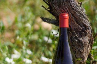 CorSalvatge 2020, el vino más  salvaje de Clos Cor Ví