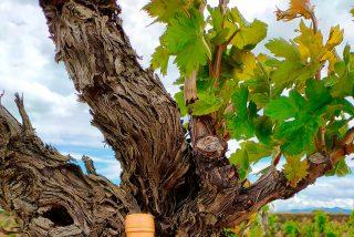 Nueva añada de Pantócrator, un gran Rioja de guarda y el vino más excepcional de Bodegas Tarón