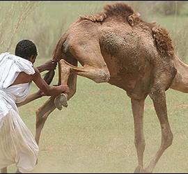Un camellero en Mauritania.