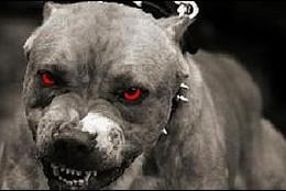 Un perro pitbull.