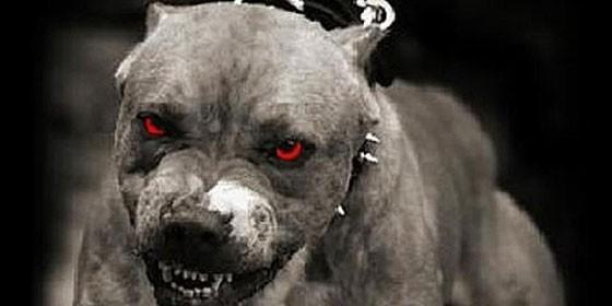 las mejores fotos de perros pitbull: