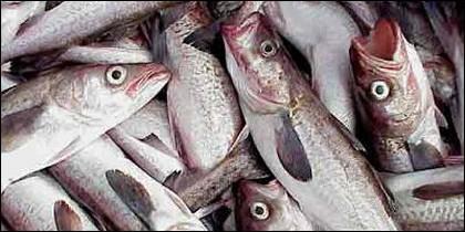 Peces y pescado.