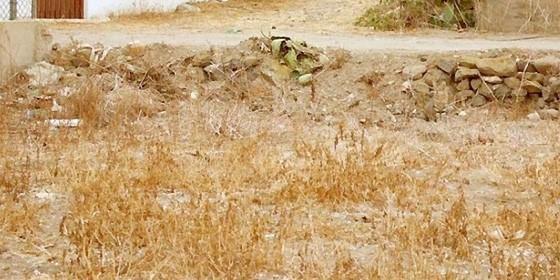 [Medio] Podrás encontrar el gato camuflado? Agudezavisual_560x280