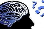 Cerebro, inteligencia, memoria y recuerdos.