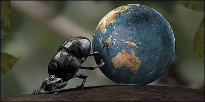 El escarabajo estercolero.