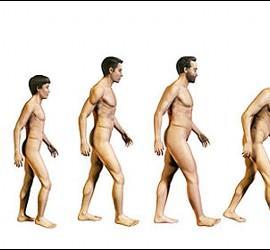 Edad, DNA, ser humano y envejecimiento.
