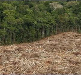 Deforestación en el Amazonas.