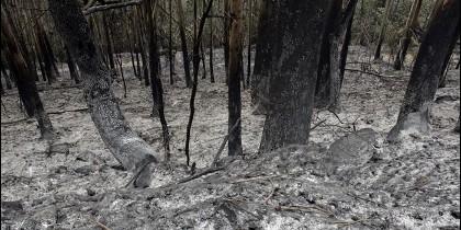 <p>Estado en el que ha quedado este paraje de Monfero, una de las zonas arrasadas por el incendio forestal que comenzó el pasado sábado en el parque natural de As Fragas do Eume. EFE</p>