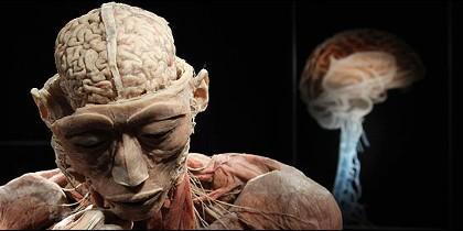 Cerebro y cuerpo humano.