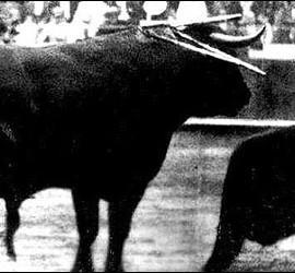 David Liceaga, torero mexicano, frente al toro más grande jamás lidiado.