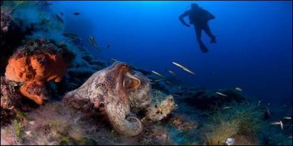 Fondo marino en Cabrera