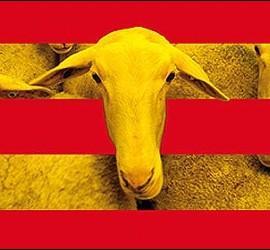 Cataluña, escuela, economia, boicot y campañas.