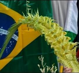 Francisco confirmó su presencia en la JMJ de Brasil
