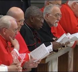 Cardenales, en la adoración