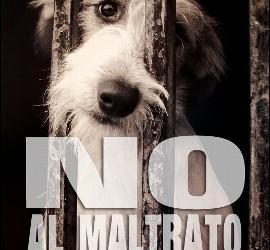 maltrato animal, sentencias etc. No-al-maltrato-animal_270x250