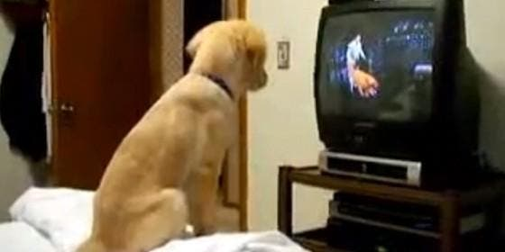 PERROS QUE VEN LA TELE Perro-viendo-tele_560x280