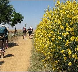 Peregrino en el Camino de Santiago.
