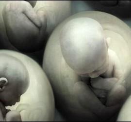 Demografía, natalidad, fertilidad y aborto.