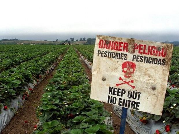Pesticidas mortales en la huerta