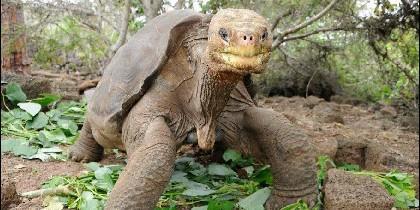 'Pepe, el Misionero', símbolo de las Islas Galápagos.