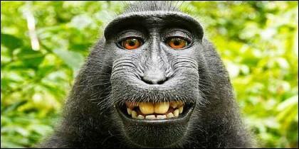 El simpático macaco