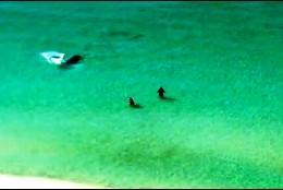 El tiburón y los bañistas en Florida