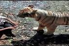 El estudiante atacado por el tigre