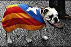 Un perro con la bandera estelada apoya la independencia de Cataluña.