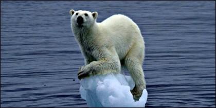Un oso polar en equilibrio.