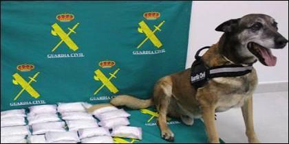 El perro Barry y la droga
