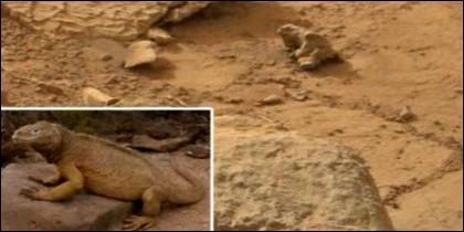 Posible iguana en Marte.