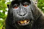 El Mono Feliz se hace un selfie.