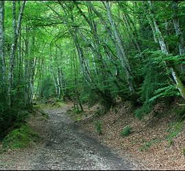 El Camino de Santiago ofrece a la vista parajes únicos.