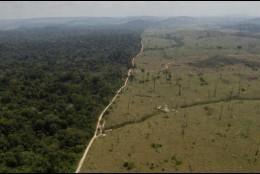 La brutal deforestación de la Amazonía