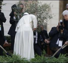 El Papa planta un olivo en el Vaticano por la paz