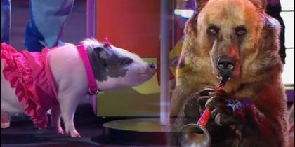 Dos de los animales participantes.