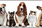 Perros, gatos y otras mascotas.