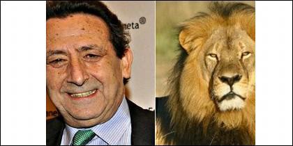 Alfonso Ussía y el león Cecil.