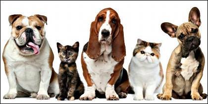 Perros, gatos, mascotas.