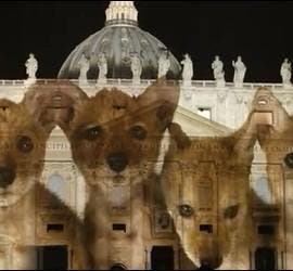 Cuatro crías de lobos iluminan la fachada de San Pedro