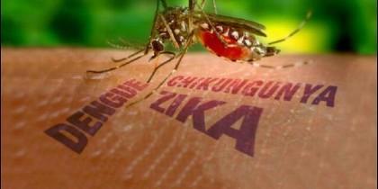 El virus zika