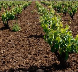El sector agroalimentario potencial el cuidado del medio ambiente