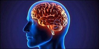 Cerebro, inteligencia, mente, pensamiento.