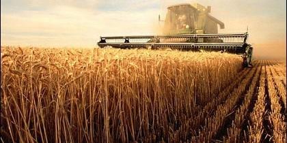 Imagen de la cosecha en un campo de cereal