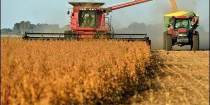 Imagen de la cosecha de cereal 2015