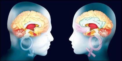 Inteligencia, cultura, sensibilidad, emociones y el cerebro del hombre y el de la mujer.